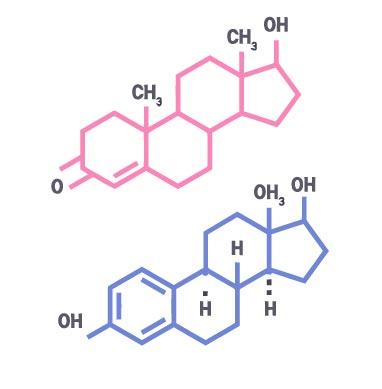 Image represantant L'Endocrinologie
